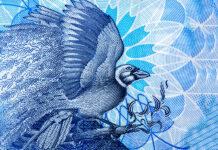 trinidad tobago banknotes